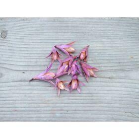 szaraz-termes-csillag-lili-lila-1