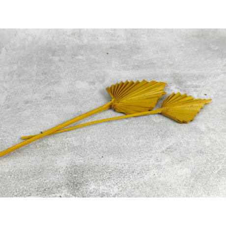 Sárga szárított pálmalevél kicsi méret