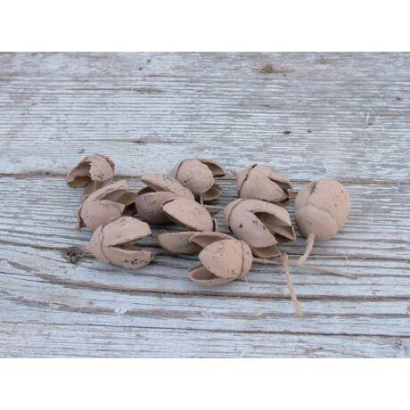Száraz termés capuccino színű bakuli