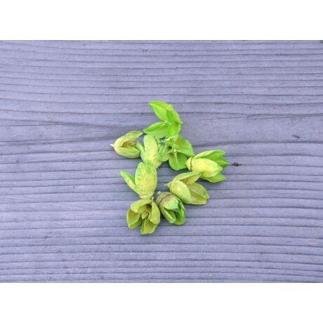 szaraz-termes-bakuli-zold-1