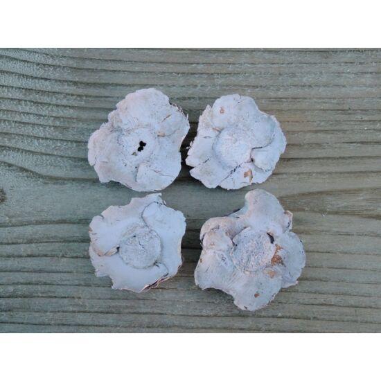 kokuszvirag-pasztell-lila-termes-1