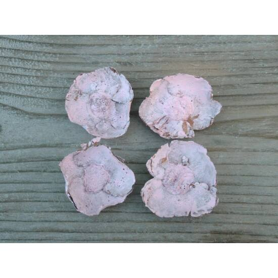 kokuszvirag-pasztell-rozsaszin-termes-1