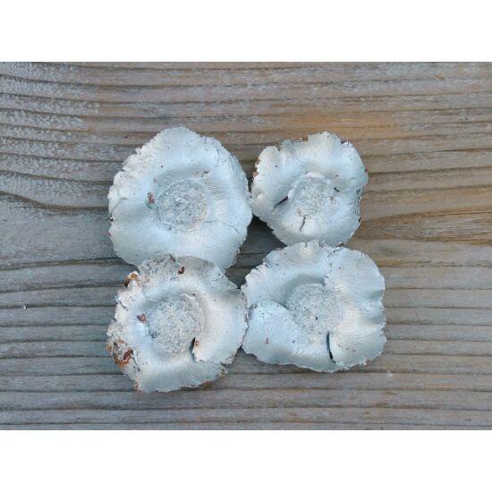 kokuszvirag-ezust-termes-1