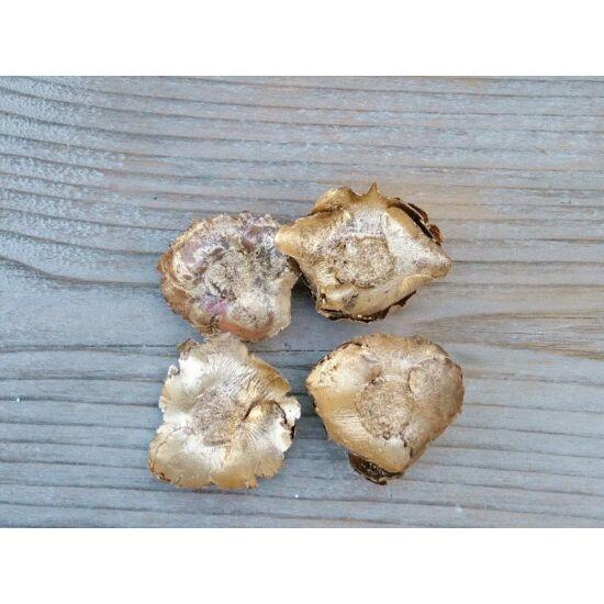 kokuszvirag-arany-termes-1