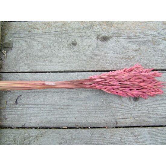 Kalászos száraz növény zab rózsaszín