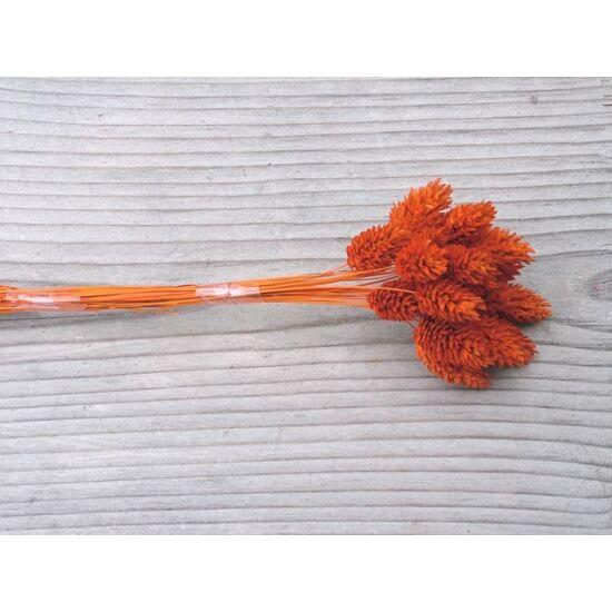szarazvirag-fenymag-narancs-1