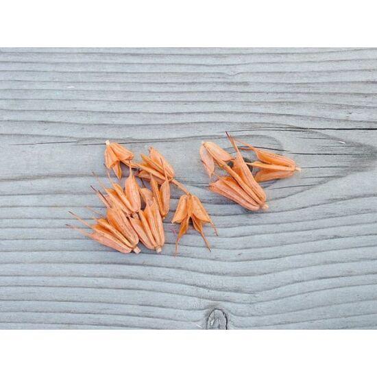 szaraz-virag-katica-narancs-1