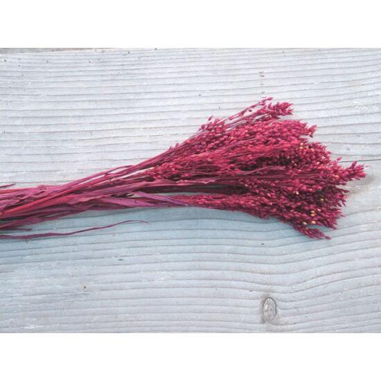 Szárazvirág köles bordó színben