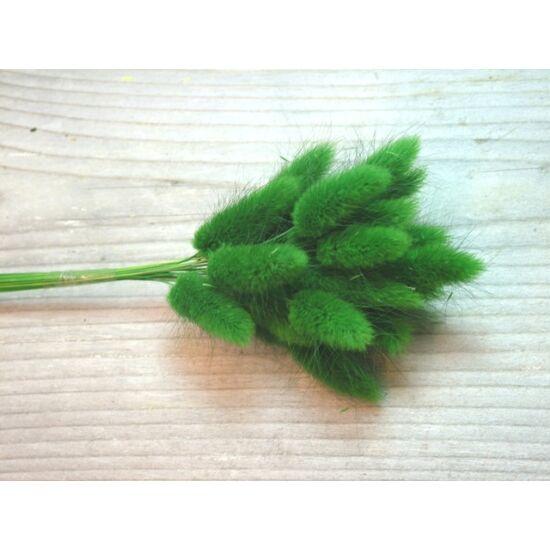 Zöld nyuszifarok szárazvirág