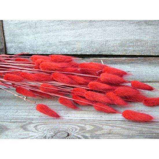 Szárazvirág nyuszifarok piros színű