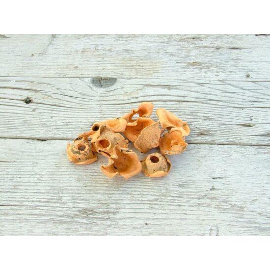 Száraz gombák pasztell narancs színben