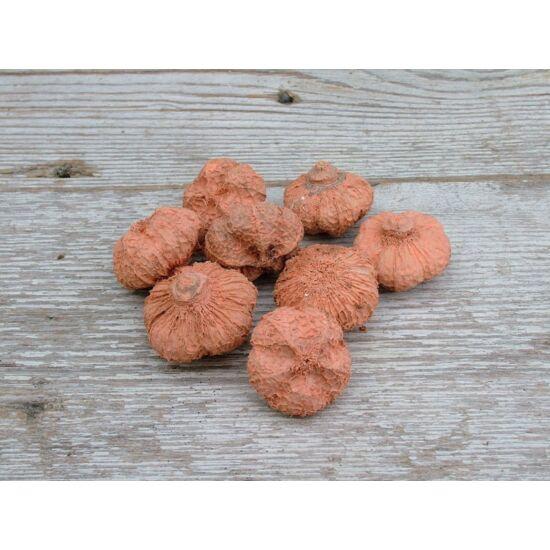 Száraz termés világos narancs