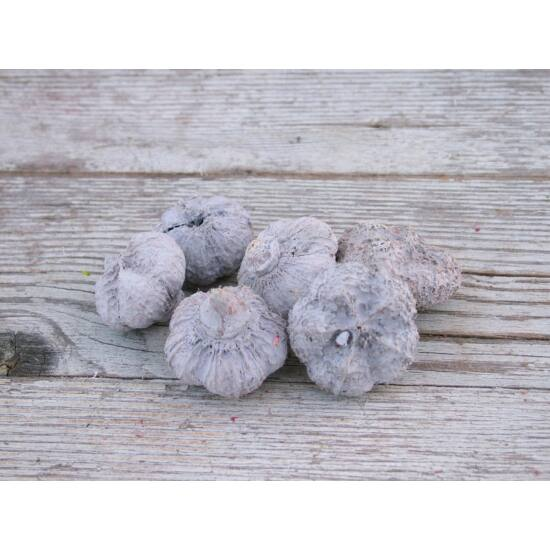 Tavaszi dekorációs kellék lila fokhagyma száraz termés