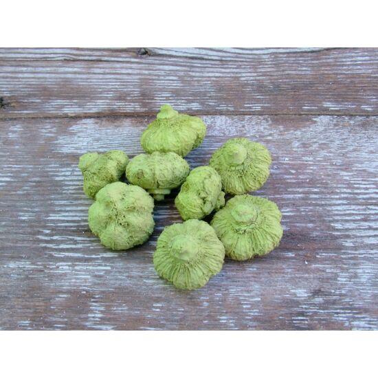 Világos zöld fokhagyma száraz termés