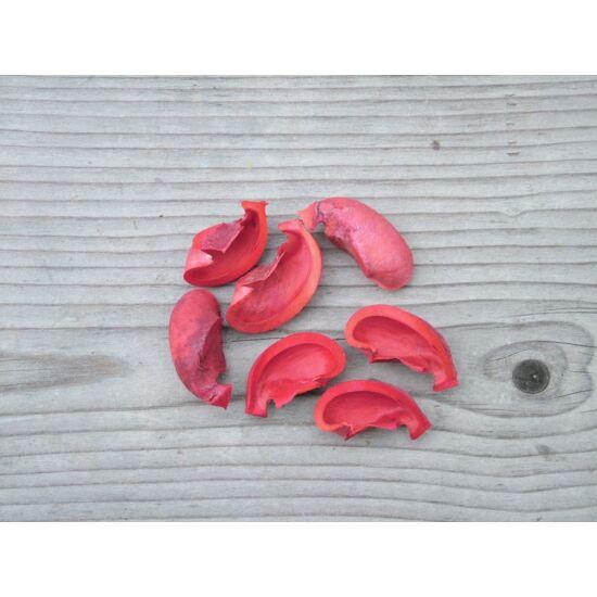 szaraz-piros-termes-1