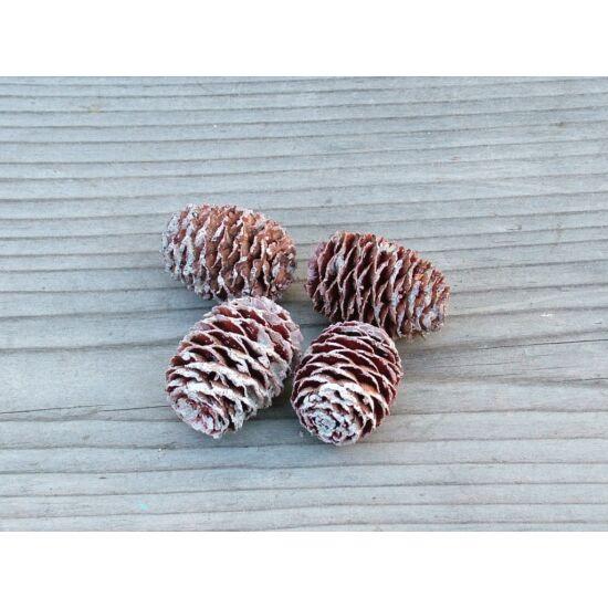 tropusi-szaraz-termes-havas-3