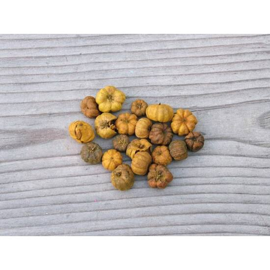 szaraz-termes-mini-tok-sarga-1