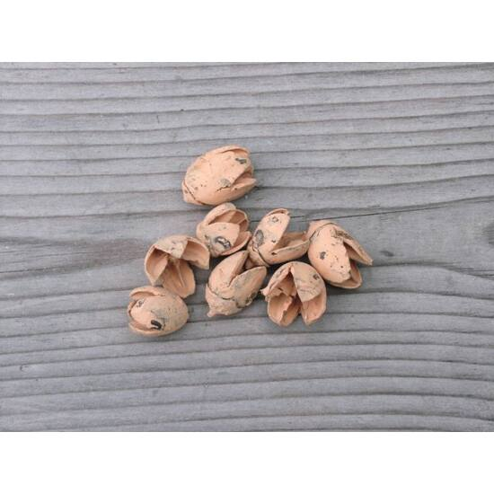 szaraz-termes-bakuli-barack-1