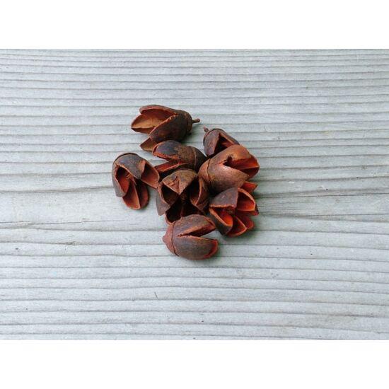 szaraz-termes-narancs-bakuli-1