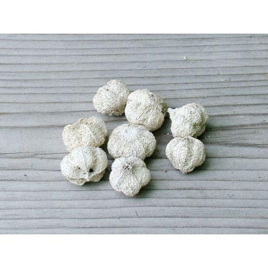 szaraz-termes-fokhagyma-forma-feher-1