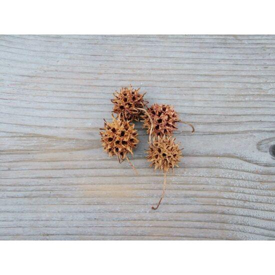 szaraz-ambrafa-termes-natur-1