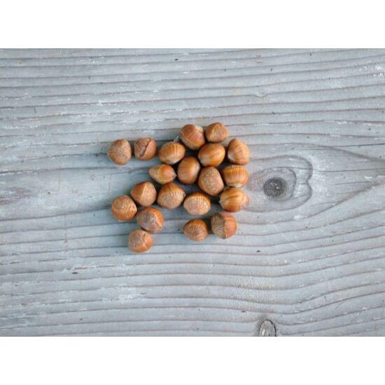 őszi dekorációs kellék mogyoró termés
