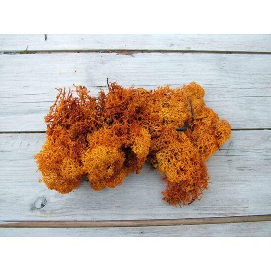 Izlandi zuzmó narancs színben