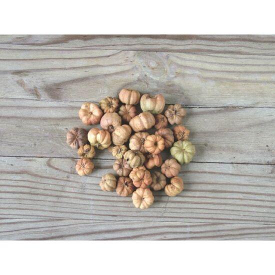 Száraz termés mini tökforma natúr