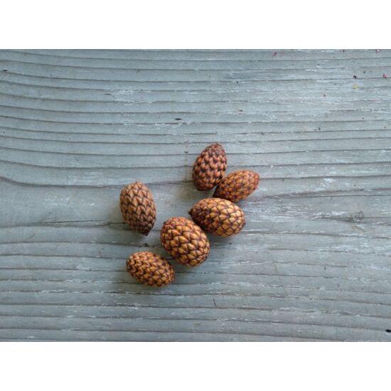 Száraz termés natúr pálmamag