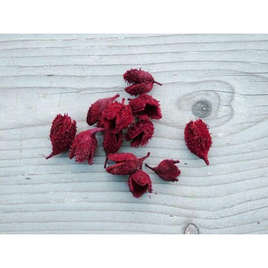Száraz termés bükk kupacs bordó színben