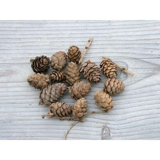 Natúr apró toboz termés